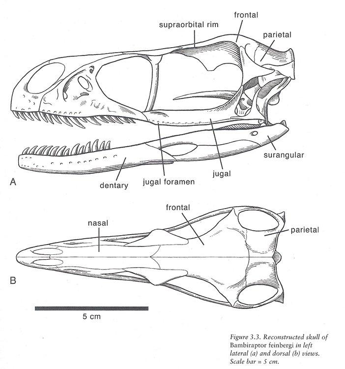skull.thumb.jpg.1a151530eafd871ba7c630efc824dfb9.jpg