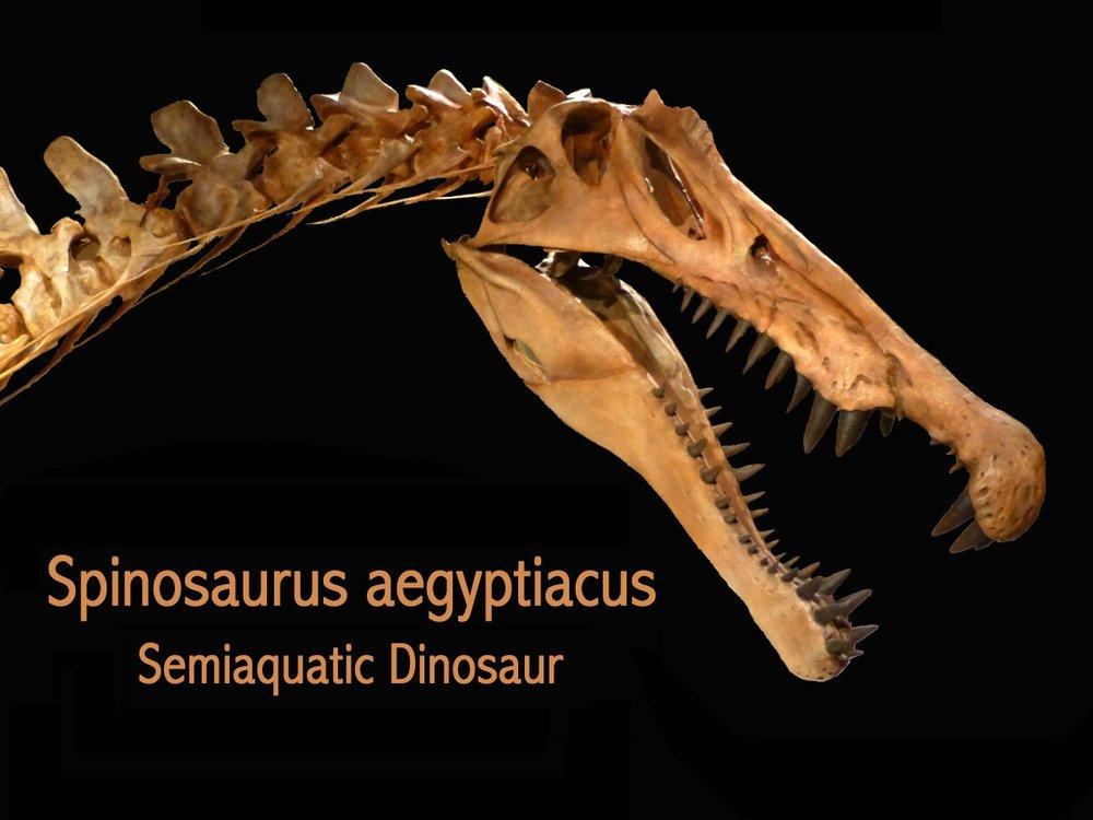 spinosaurus-og.thumb.jpg.4a19f31ddb9a63299852ba5934caf3b8.jpg