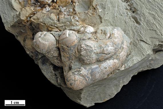 0038_foldrajz_palaeontologyda.jpg.64c819b6fa0866836e21129c057fb91f.jpg