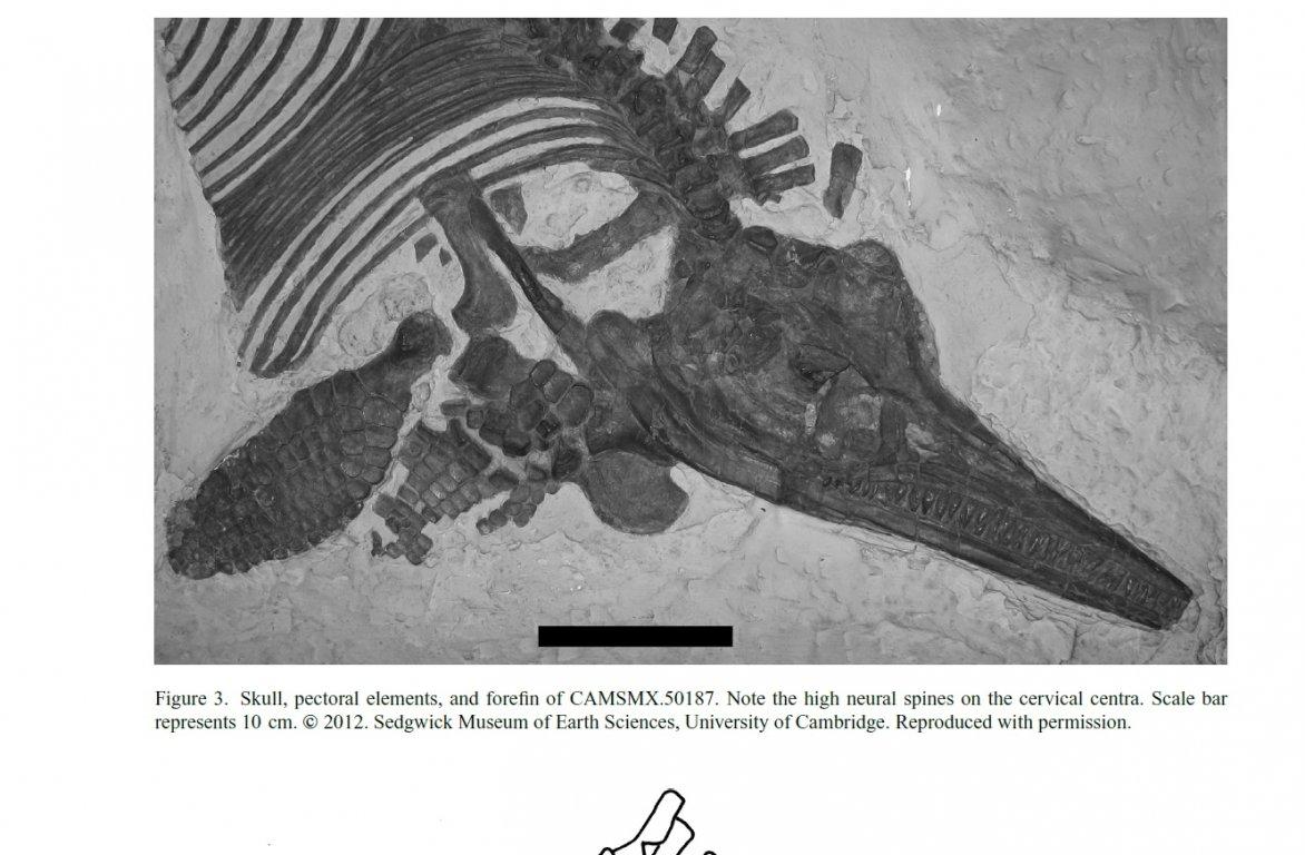 Amphipora-ramosa-4-1000 (1).jpg
