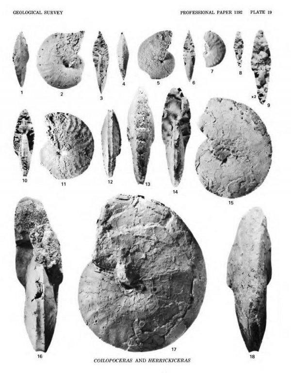 5a9571d277a75_herrickiceras(cobbanandhook)3.thumb.jpg.ea5d18b8577a046d5b51040cc68f5995.jpg