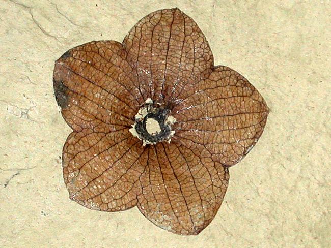 slide-show-fossil-rose.jpg.d88a86aa41e69cf4a443d4fd55eac805.jpg