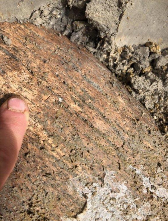 Qsr Mammuthus columbi Tusk 1z 030218.jpg
