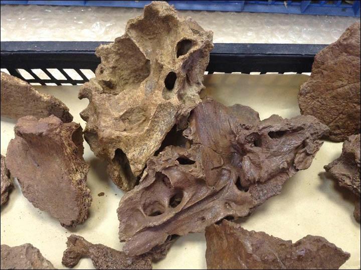 Mammoth skull 2.jpg
