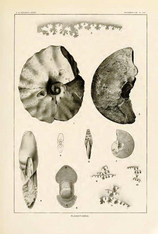 p.pseudoplacenta4.thumb.jpg.edfcd8b123e826eb41f982cc738bb956.jpg