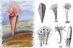 Paraconularia ulrichana