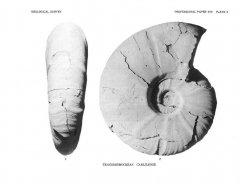 Tragodesmoceras carlilense (Cobban, 1972)