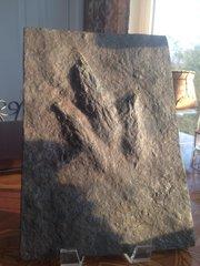 Grallator Dinosaur Track, South Hadley, Mass