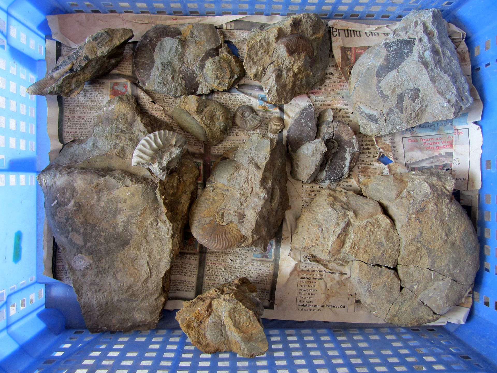 A bit of luck in the Aalenian - Fossil Hunting Trips - The Fossil Forum