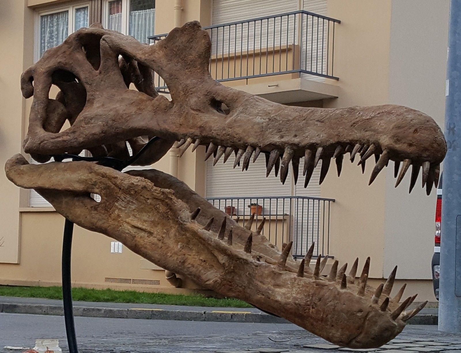 Image result for Spinosaurus Skull