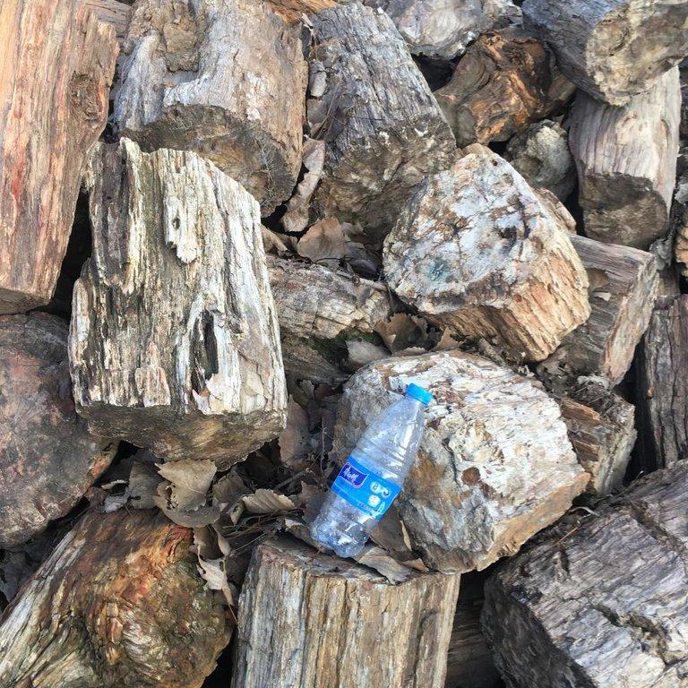 petrified wood 1.jpg