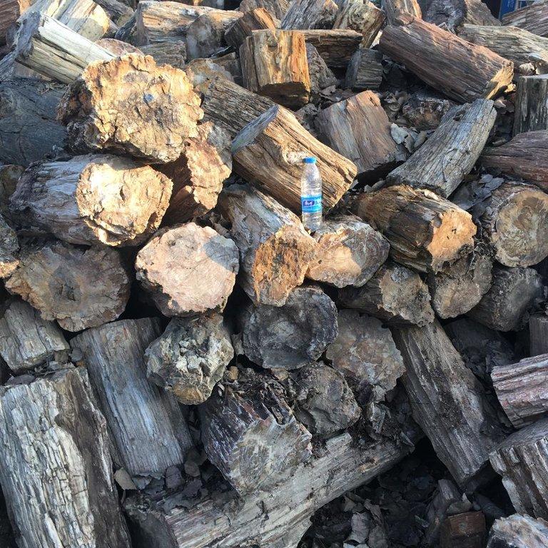 petrified wood 2.jpg