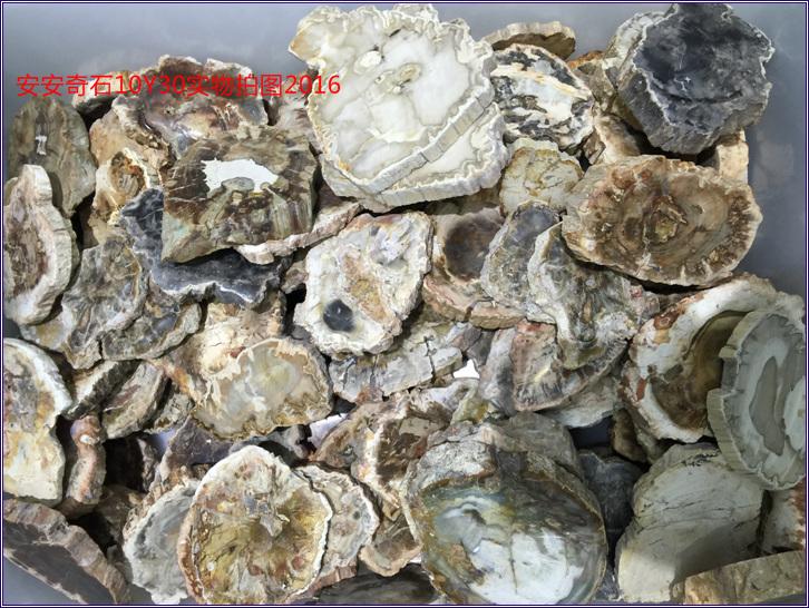 petrified wood 4.jpg