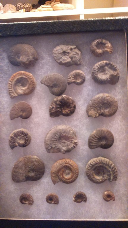5acd0355b2d3b_Ammonitessouthfrance.thumb.jpg.a3847fe585b16ffad64b62a87d96bcc2.jpg