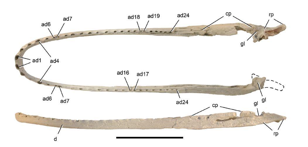 Laganosuchus.jpg.f06602096c8c37580570cdb4784e94ba.jpg
