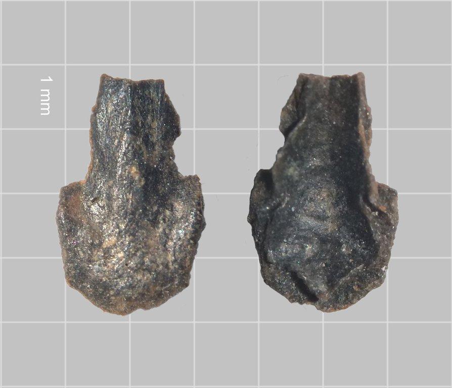 Osteoderm-Carapace.jpg.3617c39962f0f16770888fec4c0dd8d9.thumb.jpg.72e9caca9cb5bd07f1bf3a80a67cf197.jpg