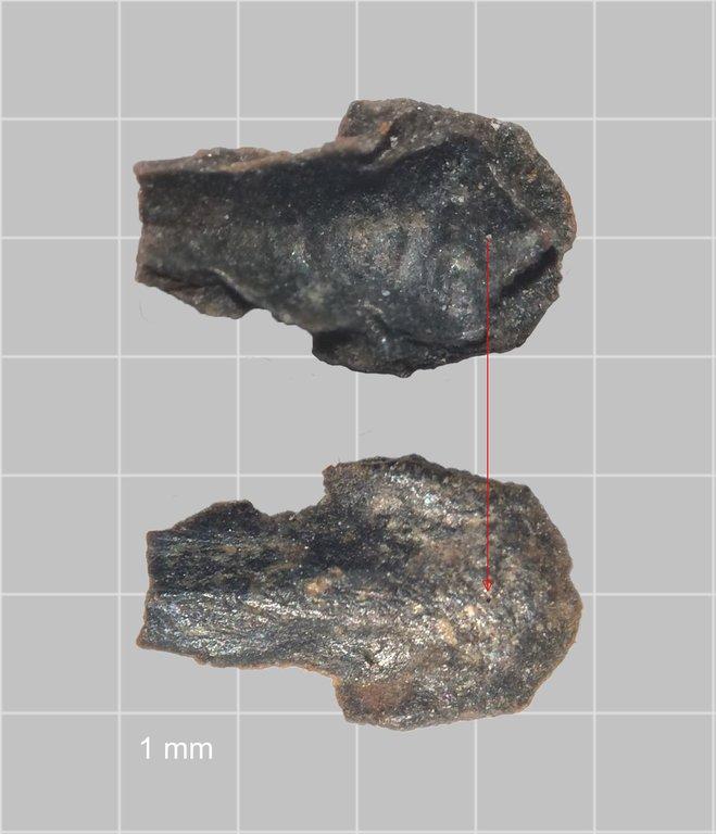 Osteoderm-Carrapace.thumb.jpg.5703dc966af133b2443d3d5983aa45eb.jpg