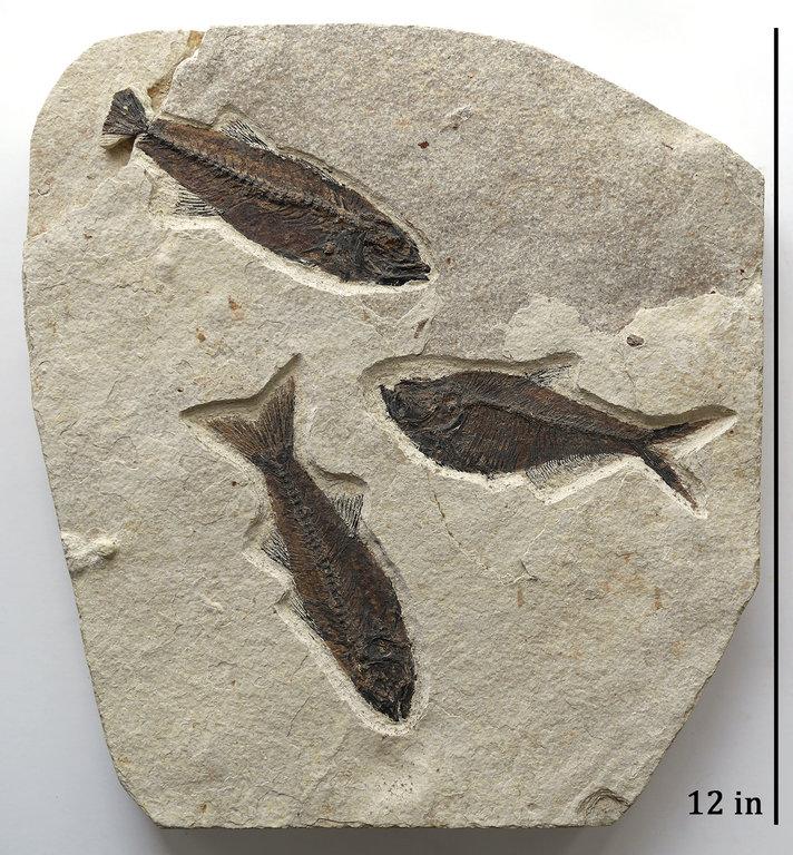3-fish.thumb.jpg.1a48aabbf53bec02bd9a1e57e11b8b96.jpg