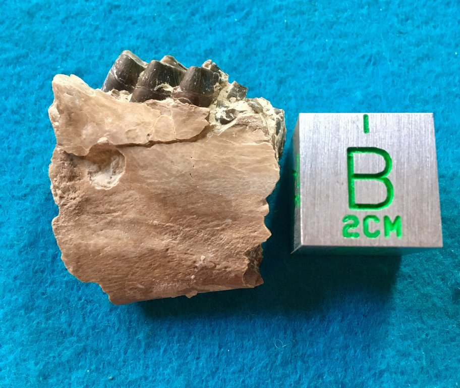 38EB4F4C-4C8F-4B4C-B5D0-42040CA4EEFB.jpeg