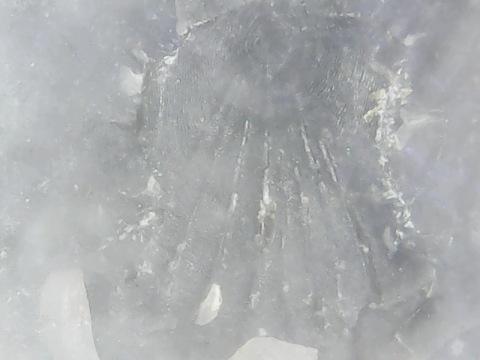 unidentified scale 4.jpg