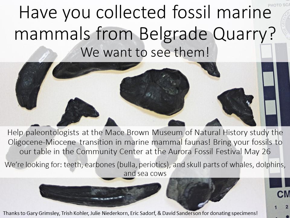 Belgrade fossils flyer.jpg