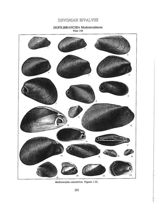 LinsleyModiomorpha.jpg