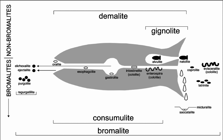 Selected-classification-terms-for-bromalites-gignolites-and-associated-trace-fossils.png
