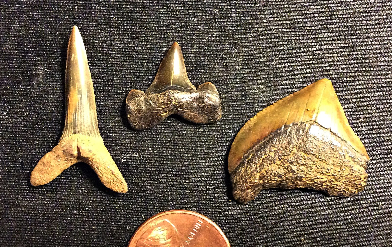 Cretaceous Shark Teeth from Big Brook, N.J.