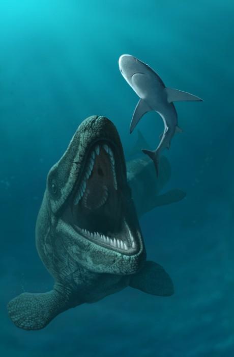 mosasaurus_hoffmani_by_olorotitan-d4esmfm_5c48.jpg