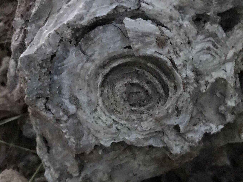 06-03-18 Fossil.jpg