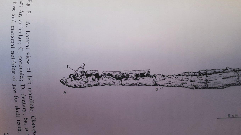 Champsosaurus.jpg.47d8088436162ee0d77947e8e9b1c11c.jpg