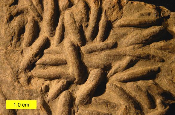 DevonianLockeia121911_585.jpg.eefee306b07c7b040e765c9aae04a6d4.jpg