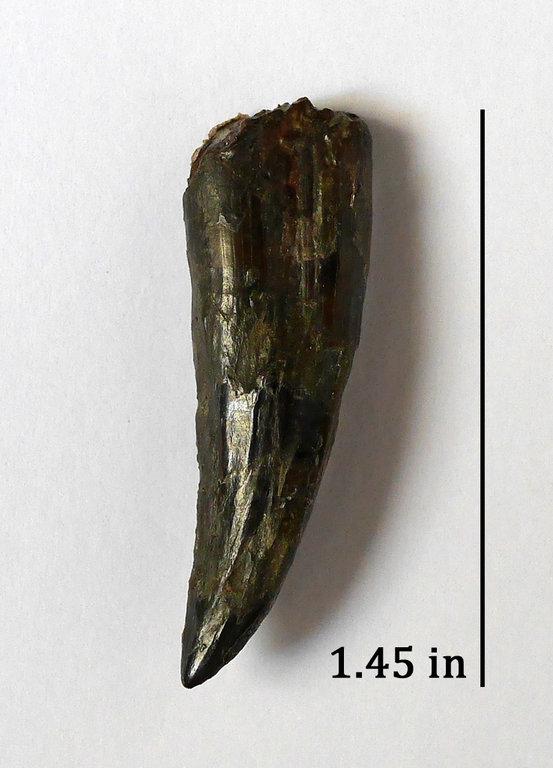 Dimetrodon_3b.thumb.jpg.a9492c8ab6c8ed6605d6f18960fdfec5.jpg