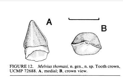 Melvius.JPG.7fd5c482d7b16e1a40a923f18c342edc.JPG