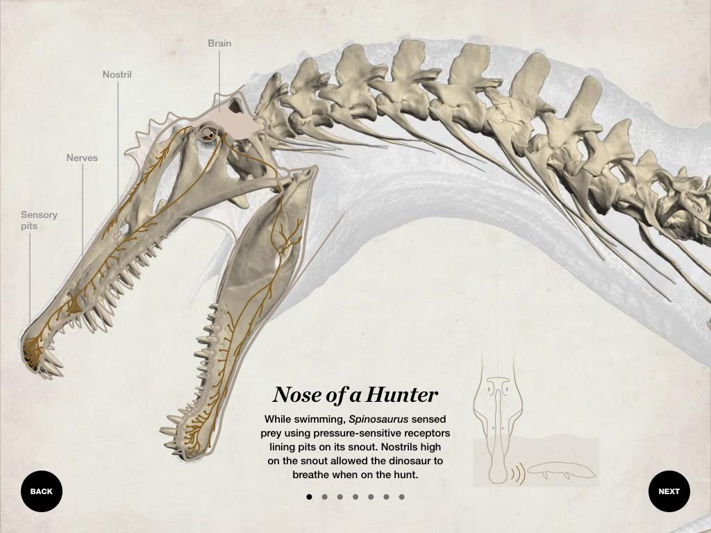 building-spinosaurus-04-nose.jpg.29ba2b2fff07a2b227a93f47292a3fa5.jpg