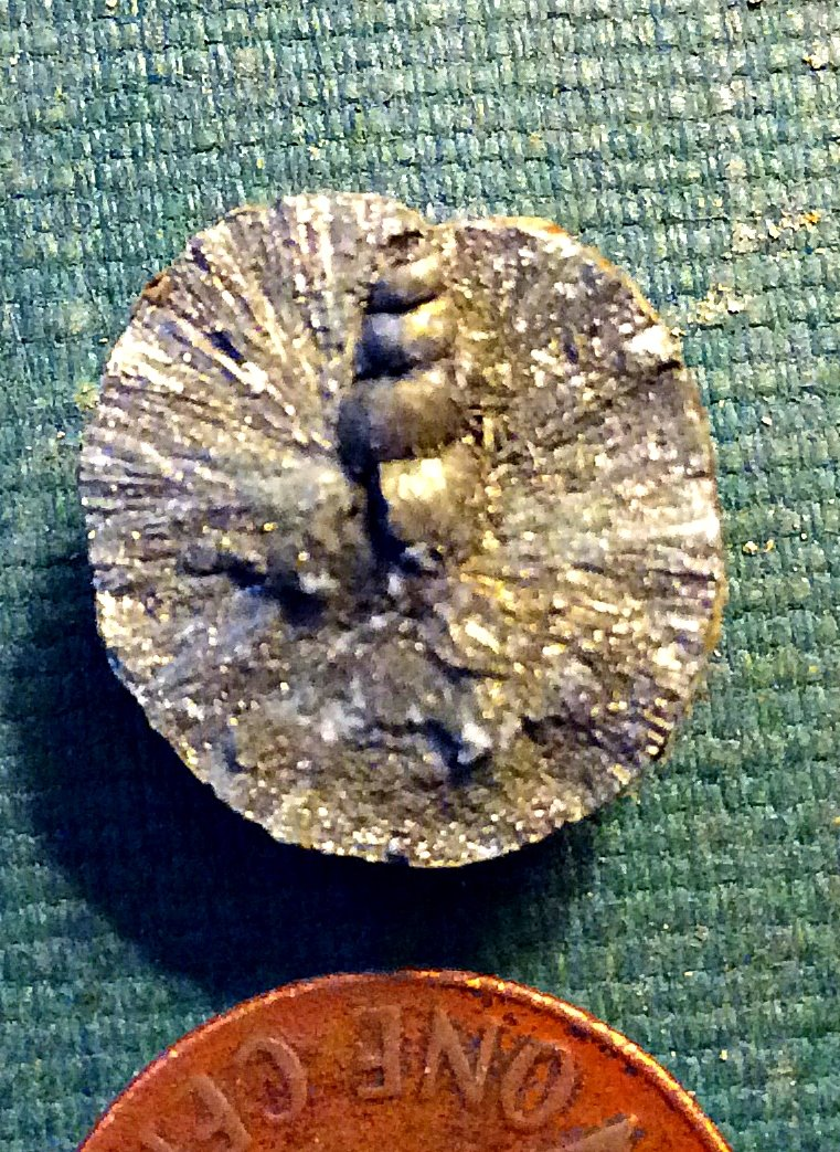 Loxonematoid Gastropod from Spring Creek in Pyrite Nodule