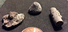 Crinoid Parts from the Lower Devonian Kalkberg Formation, N.Y.