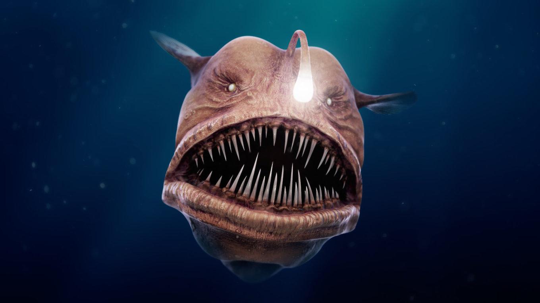 thomas-veyrat-anglerfish-view02-front.thumb.jpg.e3b3169ce3bfd930e540a06d86cb9ef4.jpg
