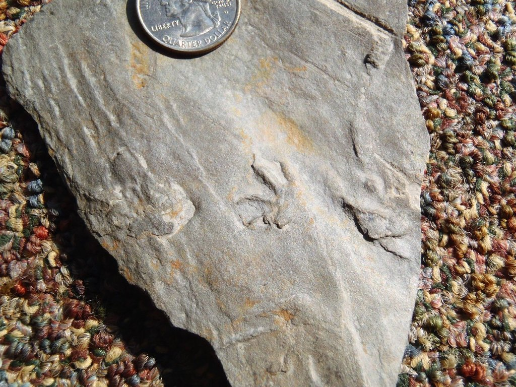 fossil footprint.jpg