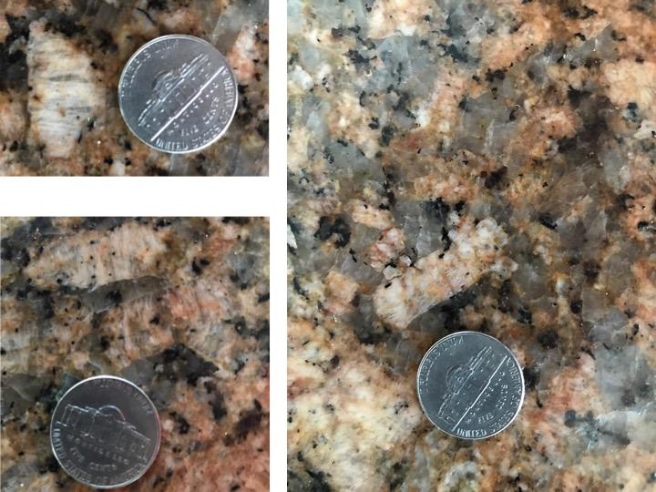 Countertop crinoids 1.jpg