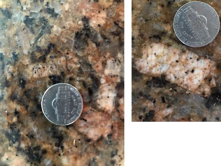 Countertop crinoids 2.jpg