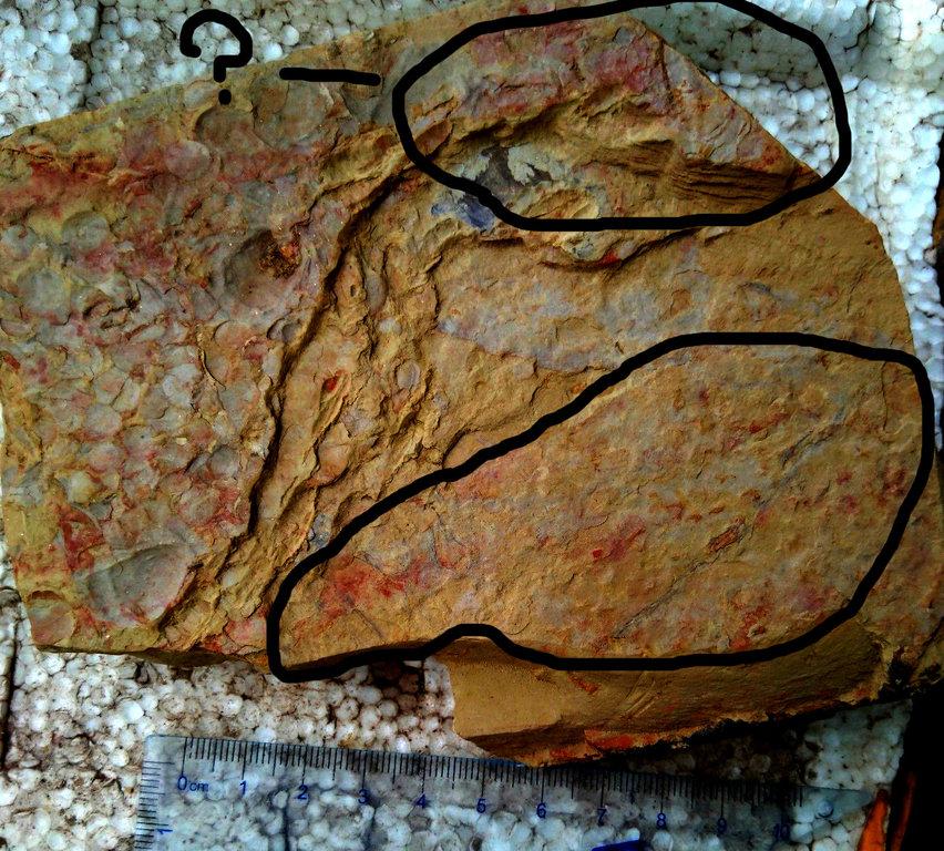 ventlicola found.jpg