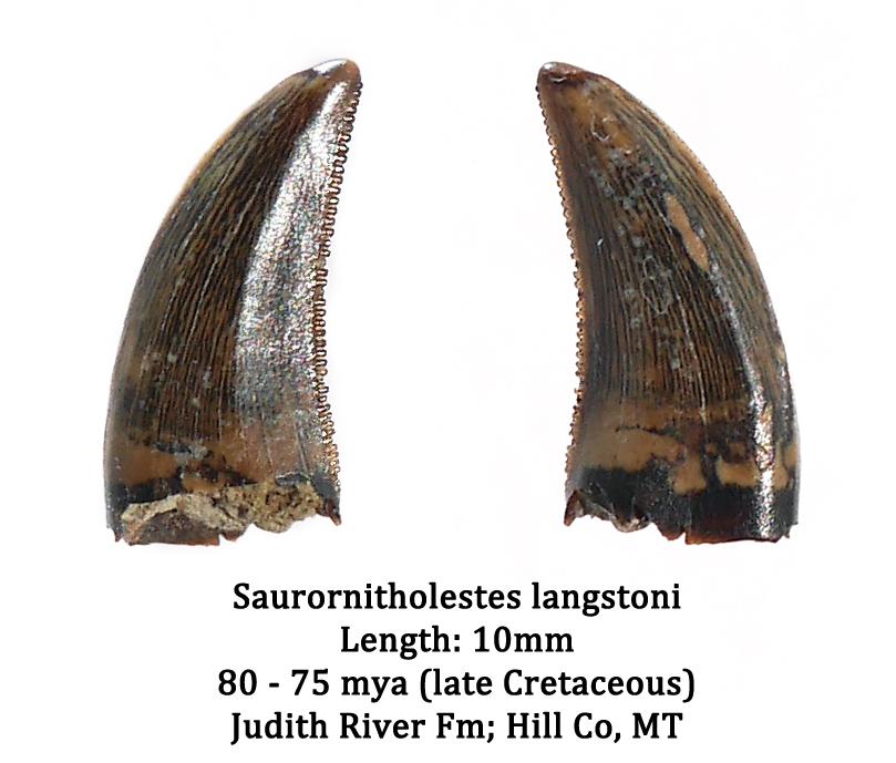 Sauronitholestes.jpg.2415a0017029ee1733e8308297746349.jpg