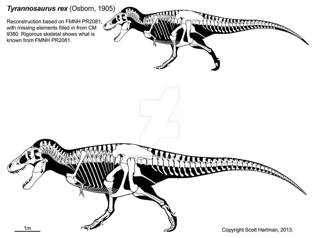 a_t__rex_named_sue_3_0_by_scotthartman-d21wpi8.thumb.jpg.5e0d8eac3c9fcef01f9da7fa68ddfc88.jpg