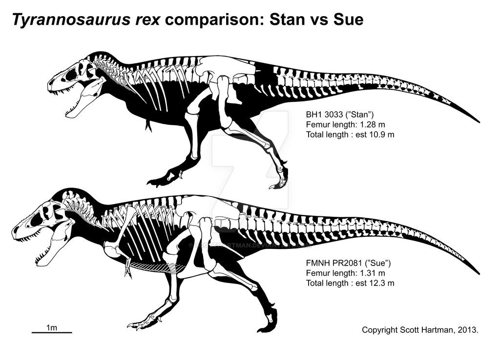 stan__n_sue_comparison_by_scotthartman-d5yvql0.jpg.215b938312a7bd80fc998e6a6ae909c3.jpg