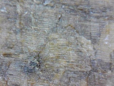 5ba2841589823_cellstructurestreefossil.jpg.e1248deda6c0087a22e1580baf01f455.jpg