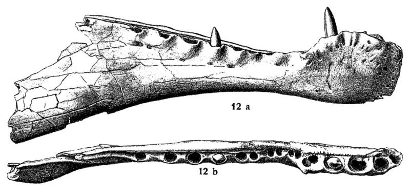Stromer1915SpinosaurusMandibleDrawings.png.a50802bc7011a9758559665d8601fd60.png