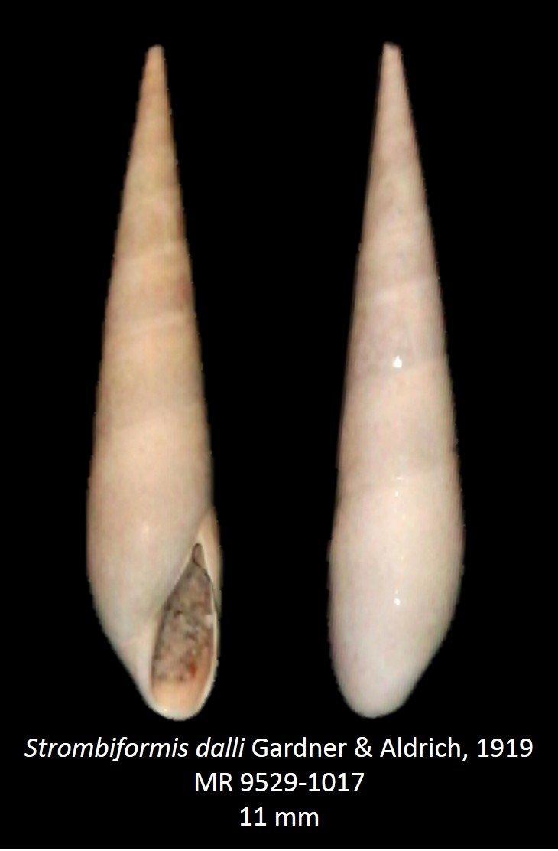 Strombiformis dalli