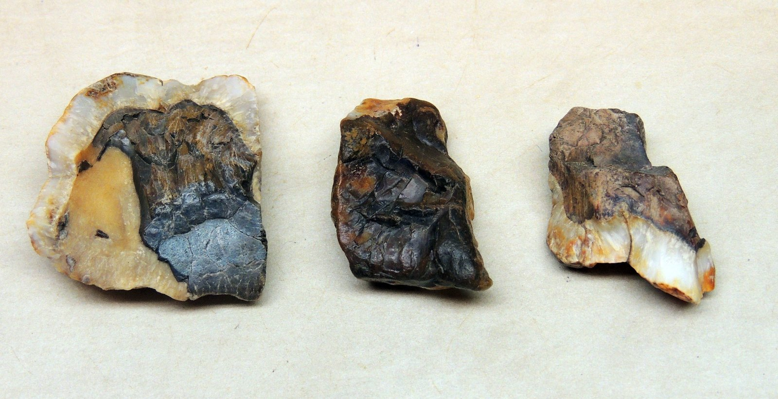 Mammoth tooth fragments
