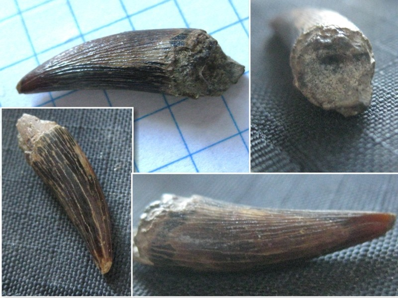 plesiosaur.jpg.a4dcdcd618156a09bcb57b1a4b809421.jpg